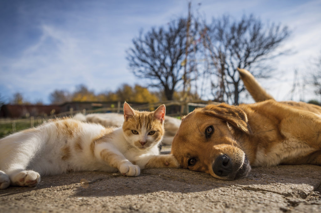Cat and Dog lying in the sun