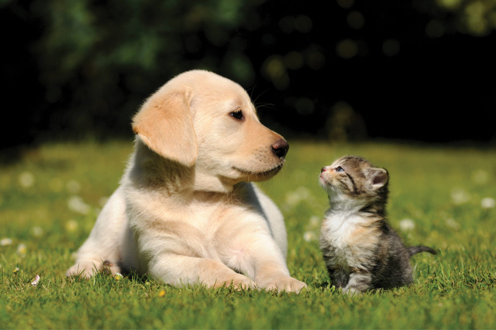 puppy and kitten in the grass